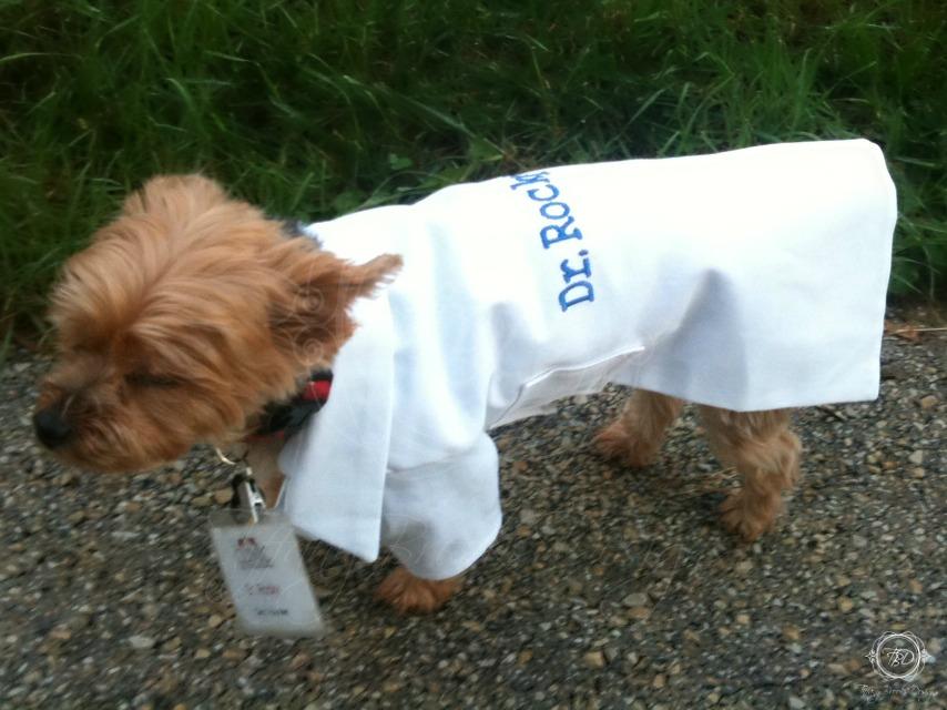 dog lab coat | Tiffany Brooks Designs